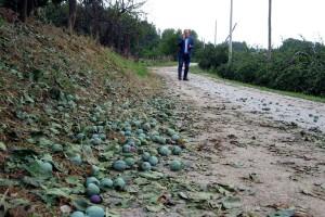 Topola: Nemilost neba košta 20 miliona evra