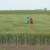 Bayer Farm: Otkrijte najbolja rešenja protiv korova do 5. jula na virtuelnom Danu polja