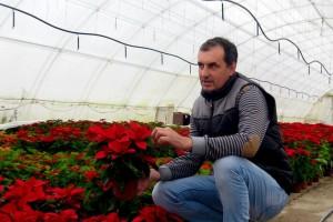 Repromaterijal poskupeo 100%, a cveće samo 10%