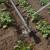 Baštica će navodnjavati 158 ha u vlasništvu 43 poljoprivredna gospodarstva