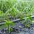 Poboljšajte pH vode za navodnjavanje s kiselim gnojivima