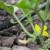 Izazovi navodnjavanja biljaka u plastenicima