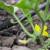 Izazovi navodnjavanja biljaka u plasteničkoj proizvodnji
