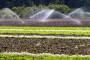 Navodnjavanjem do smanjenja uvoza hrane