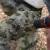 Većina cijepi pod koru ili klin, Ivan Serdarević usavršio je navrtanje masline - bušilicom