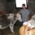 Nedžib Dudaković: Ne prodajem mlijeko jer je jeftino, bolja je računica prodavati telad