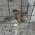 Panika u Zagori: U svega nekoliko dana otrovano sedam lovačkih pasa
