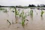 Olujne prognoze za tržište žitarica