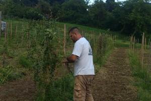 Umjesto žita za stoku, OPG Farkaš uzgaja goji, aroniju i drugo bobičasto voće