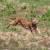 Stigao i Emil - novi ris u parku prirode Velebit