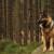 10 najpametnijih pasmina pasa