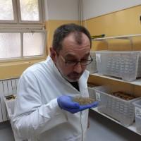 Prva hrvatska farma kukaca, cvrčci i vojnička muha alternativa GMO soji iz Brazila?