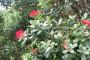 Novozelandsko božićno drvo ostavlja bez daha