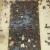 Nozema - tihi ubojica pčelinjih društava