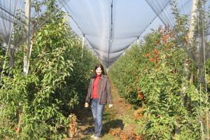U Posavini žele na deminiranom zemljištu pokrenuti eko proizvodnju