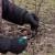 Obavezna zimska rezidba voćki u prvoj godini po sadnji