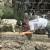 Šestogodišnji Andrija prepoznao ugriz vuka na vratu usmrćenih koza