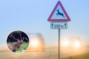 Odlične vijesti za sve vozače! Novi Zakon o lovstvu donosi jedinstvenu policu osiguranja