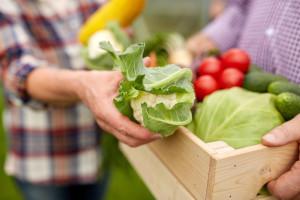 Oktobar: Priprema povrća za zimu