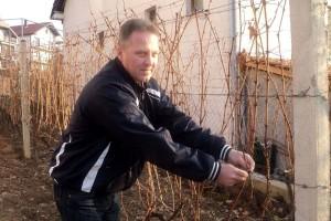 Čokoti loze koje je zasadio Titov vinogradar