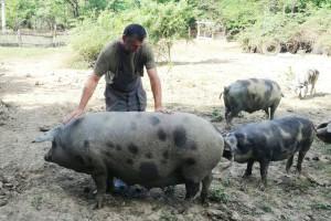 Ovce zamijenili banijskom šarom: Dijelom i kako bi pridonijeli njezinu opstanku
