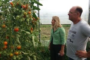 Darko Šipek: Nepovjerenje potrošača u domaće eko proizvodei dalje je veliko
