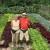 Počeo s 49 godina, danas je Vlado Hedl (78) primjer uspješnog poljoprivrednika!