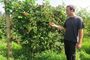 Proizvodnjom bobičastog voća OPG Čuković počeo se baviti još 80-ih godina, od kupina, malina i jagoda - može se živjeti!