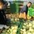 Plastenike OPG Komar uništili vjetar i tuča - za obnovu dobili 371 tisuću kuna europskog novca