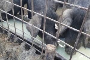 Zaštita domaćih svinja od afričke svinjske kuge, ministarstvo sufinacira dvostruke ograde
