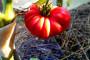 Ekološki uzgoj voća i povrća - put do zdravlja!