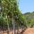 Za pomoć vinskom sektoru osigurano 20 milijuna kuna