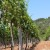 Osigurano šest milijuna kuna potpore regionalnim organizacijama vinara i vinogradara