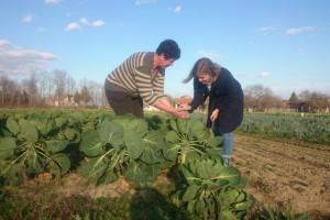 Konvencionalni uzgoj OPG Šipek zamijenio je ekološkim: Želimo da naši unuci jedu zdravu hranu