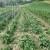 Na samo jednom hektaru Anka Štabić uzgaja 55 različitih sorti graha