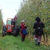 Bazen s pogledom na voćnjak, spojio uzgoj i preradu voća s turizmom