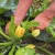 Povrće se nakon kiše razboleva - kako ga oporaviti na prirodan način