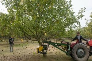 Proizvodnja oraha u Srbiji  nije dovoljna za izvoz