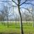 Uzgoj oraha u Hrvatskoj: Površine rasle, proizvodnja ne