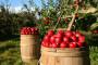 Jesenji radovi u bašti i voćnjaku