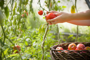 Dozvoljena sredstva u zaštiti bilja u ekološkoj proizvodnji