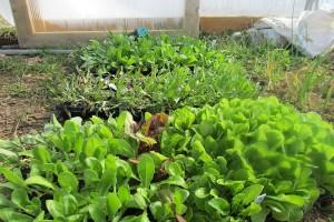 Značaj plodoreda u ekološkom povrćarstvu