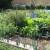 Kako sijati i njegovati povrće u organskom uzgoju?