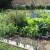 Kako sejati i negovati povrće u organskom uzgoju?