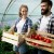 Objavljen Pravilnik o korišćenju podsticaja za organsku biljnu proizvodnju
