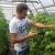 Subvencije: Proizvođači organskog bilja sada mogu dobiti do 520.000 dinara