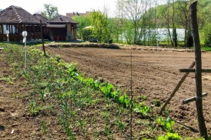 Zaštitite bašču i voćnjak prirodnim putem - biljkama, insektima i kopanjem