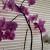 Spustite rolete, zaštitite orhideje