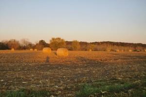 Mikrobiološka đubriva kao zamena za mineralna đubriva i pesticide