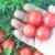Brčak u Parizu: Petar Jasak ameterski istražuje stare otporne sorte paradajza